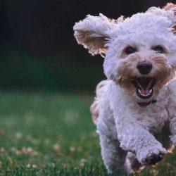Hund - Jämför hundförsäkringar - bästa hundförsäkringen